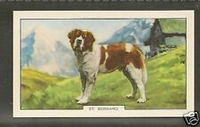 Rare 1938 UK Dog Art Full Body Alpine Gallaher Cigarette Card ST. SAINT BERNARD