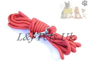 STRONG Nylon Rope Dog Puppy Lead Leash Trigger Clip , CHAMPION
