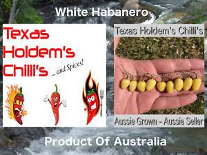 5 x White Habanero chilli chili seeds. Little pods, one of the hottest habaneros