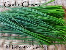 Chives Garlic Seed 50 Seeds Herb Heirloom Medicinal Garden