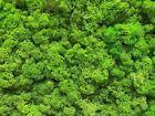 Islandmoos - 5 Farben. Echtes konserviertes Natur Moos zum Basteln und Modellbau