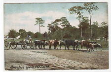 Ox Team Wagon in the South 1910c #1 postcard