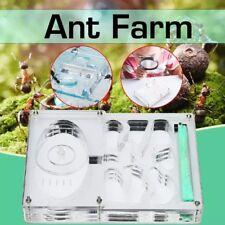 Medium Acrylic Ant Nest For Ant Colony Housing Ant Farm Formicarium