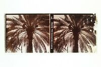 Algeria Biskra Date Foto n46L7-6 Placca Lente Stereo Vintage