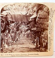 1896 Stereoview UNDERWOOD Stereoscopic BANANA PLANTATION HAWAIIAN ISLANDS
