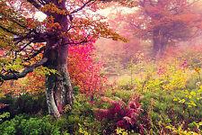 SUPERB AUTUMN FOREST LANDSCAPE CANVAS #320 QUALITY A1 CANVAS WALL ART PICTURE
