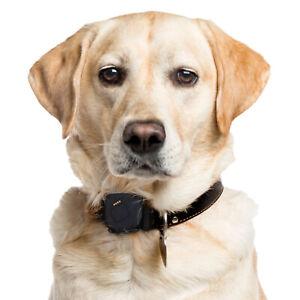 GPS Tracker for Dogs |  Waterproof | Unlimited Range