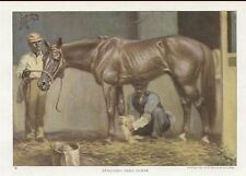 1923 ART Print STANDARDBRED RACE STABLE WITH GROOM HORSE GORGEOUS TROTTER