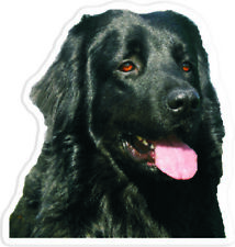 Custom Hovawart magnet magnet photo text + slate dog n3