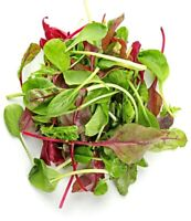Lettuce Mixed Greens Gourmet Non GMO Heirloom Vegetable Seeds Sow No GMO® USA