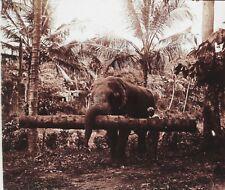 Sri Lanka Ceylan Éléphant Transport de bois d'arbres Plaque Stereo Vintager