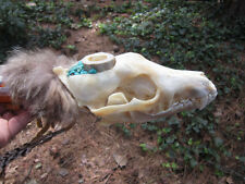 Coyote Skull Ceremonial Peace Pipe Antler Bowl Buckskin Fringed Turquoise