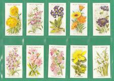 Flowers/ Garden