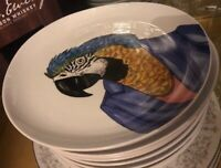 Brand New West Elm Rachel Kozlowski Dapper Animal Plate ~ Macaw