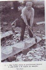 1938  --  DINAN  TRAVAIL DU BOIS  E964