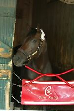 8x10 Color photo TEPIN Headshot in stall at Saratoga