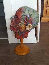 Altes anatomisches Schnittmodell eines Kopfes