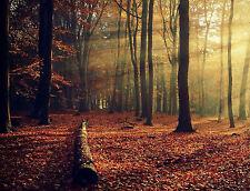 Large Framed Print - Sunny Autumn Forest (Picture Poster Art Landscape Nature)