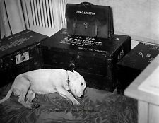 "General George S Patton's dog ""Willie"" day of his death 8""x 10"" WWII Photo 320"