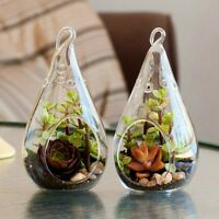 Clear Teardrop Hanging Terrariums Air Plant Candle Holder