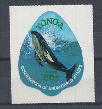 Fish Marine Life Tonga 695 Whale (MNH)