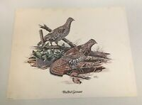 Don Balke Ruffed Grouse Game Bird Art Print-Printed In USA