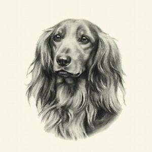 Dog Show Ring Number Clip Pin Breed - Dachshund Long-Haired
