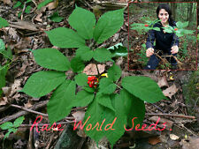 Extra Rare!! WILD CANADIAN Ginseng STRATIFIED Ready for 2016-2017 season! SEEDS.