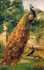 CHENPAT644 big peacock on branch&small peacocks hand oil painting art canvas