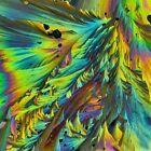 Microscope slide for polarization, Pyrogallol (melt, Version 1)