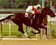 RUFFIAN DVD ALL 11 of HER CAREER RACES & MORE 65 minutes ACTUAL FILMS with CALLS