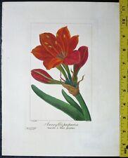 Bessa,P.Flore des Jardiniers,Amaryllis purpurea,Engraving,c.1836