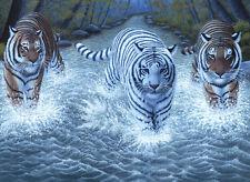 Malen nach Zahlen PJL-34 Drei Tiger