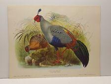 Daniel G. Elliott Siamese Crested Fireback Vintage Lithograph Art Print