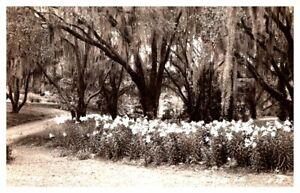 LOUISIANA Real Photo Easter Lily Beds JUNGLE GARDEN New Iberia RPPC