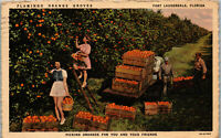 Flamingo Orange Groves Fort Lauderdale FL Picking Oranges Vintage Postcard BB1