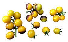 ☆ NEW Tomate Yellow Blueberry F3 ☆ 10 Samen , Sehr Gesund -Top Ertrag-