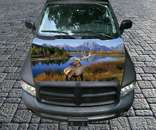 H89 DEER ELK HUNTING Hood Wrap Wraps Decal Sticker Tint Vinyl Image Graphic