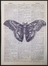 Vintage Zanzare Stampa Antico Dizionario Pagina Da Parete, Arte Foto Insetti