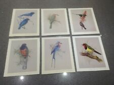 VINTAGE African Birds Series 1 PRINTS from Original Paintings by Rena M Fennesy