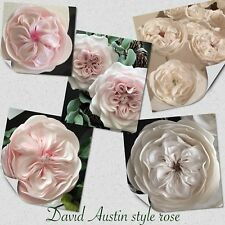 2 David Austin Rose, Sugar Flower Wedding/celebration Cake Decoration/topper