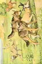 A4 Foto fuertes Louis Agassiz 1874 1927 Libro De Perros 1919 Timber Wolf & Coyote