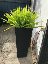 1 x YUCCA Plant & Black Concrete POT 91cm High - Pick Up Burwood 3125