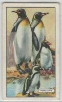Arctic King Penguin Bird c80 Y/O Trade Ad Card