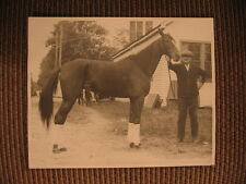 "World Record Champion Standardbred Mare ""Margaret Dillon"" Vintage Horse Photo"