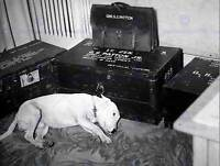 VINTAGE PHOTO HISTORIC USA DOG MOURNS GENERAL PATTON POSTER ART PRINT BB12980B
