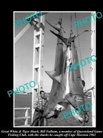 OLD LARGE HISTORIC PHOTO OF GREAT WHITE SHARK BRING CAUGHT IN 1961 GAME FISHING