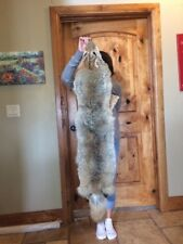 Huge  Coyote Pelt Taxidermy Pelts Hides Fur Furs  Coyotes Fox Skins Brush Wolf