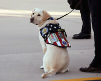 SERVICE DOG SULLY AT GEORGE H.W. BUSH FUNERAL 8x10 SILVER HALIDE PHOTO PRINT