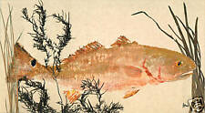 "Gyotaku Fish Rubbing - ""Grassy Seclusion"" - Red Fish"